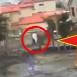 During Japan Tsunami a strange creature was caught on camera