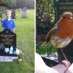 Woman Visits Her Son's Grave, A Bird Shows Up And Gives Her A Sign